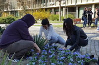 WELCOMING OF SPRING AT THE UNIVERSITY OF NOVI SAD